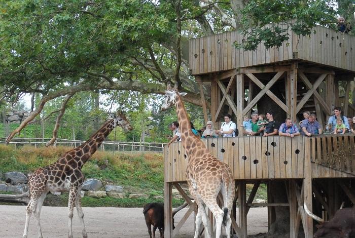 Зоопарк Пайри Дайза