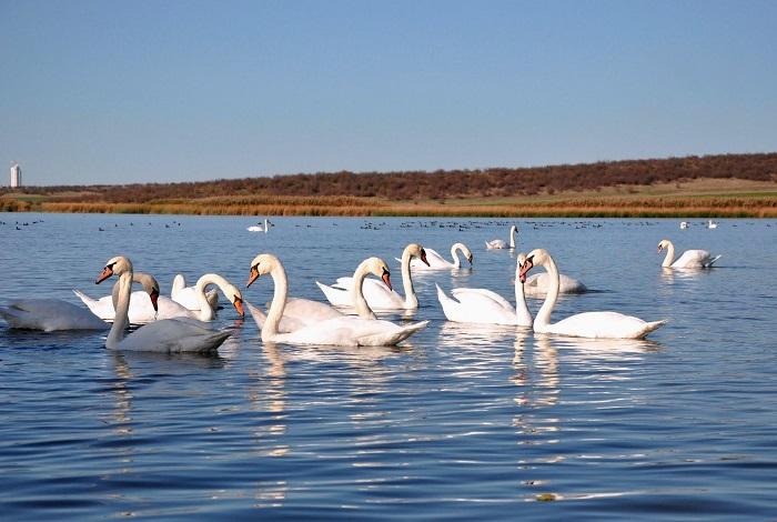 Мандренское озеро (водохранилище Мандра)