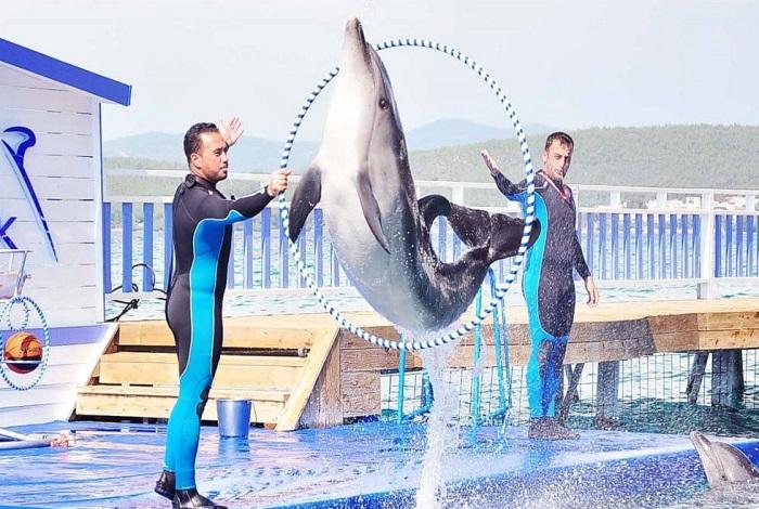 Дельфинарий Бодрума