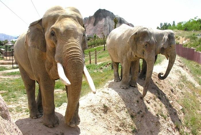 Зоопарк Терра Натура