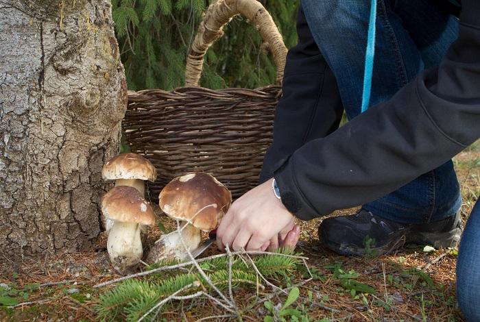 «По грибы в Юхновский район»