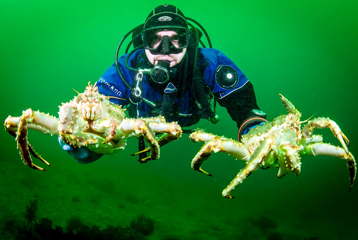 Фридайвинг на Баренцевом море