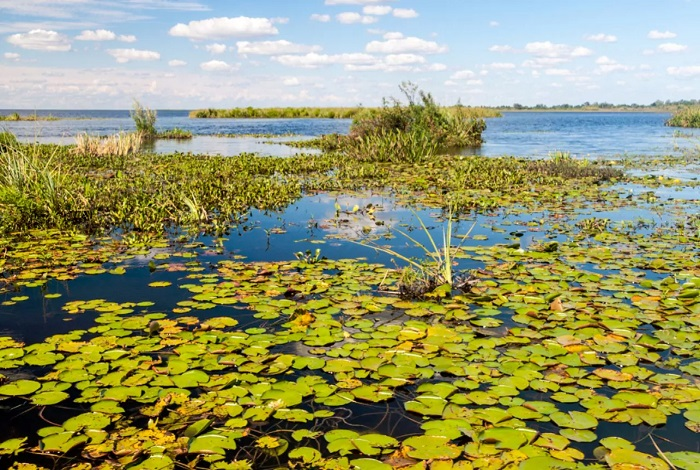 Водно-болотистые угодья Иберия