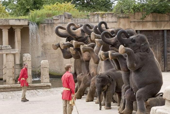 Зоопарк Эрленбис