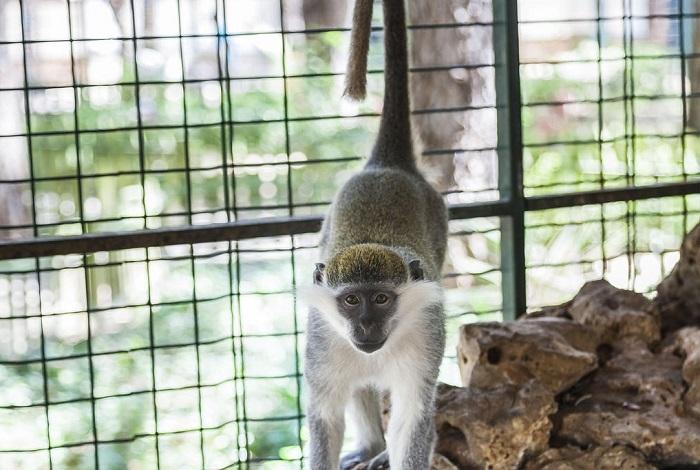 Зоопарк Беллис